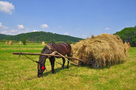 Hay preparation.  Stock Photo - 11797353