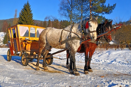 horse drawn carriage: Horses with the wooden carriage