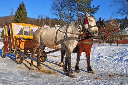 Horses with the wooden carriage Stock Photo - 12435845