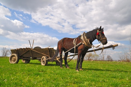 Horse  with a cart Stock Photo - 12810595