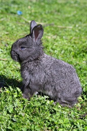 livestock sector: Small young rabbit on a grass Stock Photo