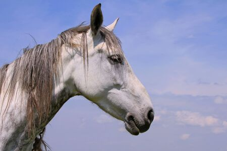 Head of a horse against the sky Stock Photo - 13855134