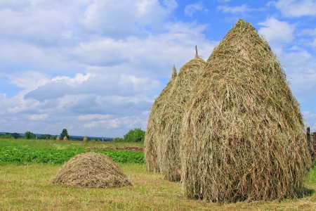 Hay in stacks photo