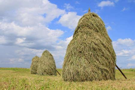 haymaking: Hay in stacks
