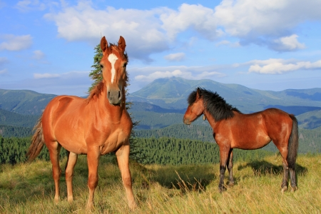 Horses on a summer mountain pasture Stock Photo - 14560681