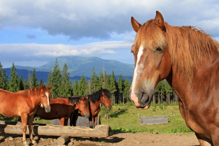 Horses on a summer mountain pasture Stock Photo - 14560713