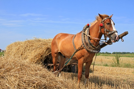 Transportation of hay by a cart Stock Photo - 14652999