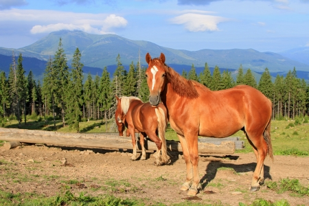 Horses on a summer mountain pasture Stock Photo - 14653028