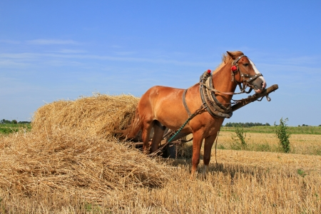 Transportation of hay by a cart Stock Photo - 14718285