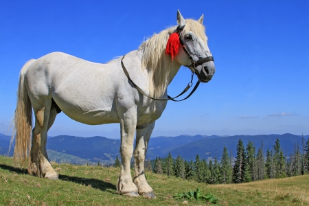 Horse on a summer mountain pasture photo