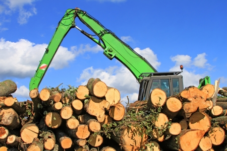 tree felling: Wood preparation