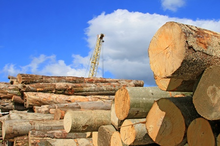 Wood preparation Stock Photo - 15145020