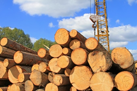 Wood preparation Stock Photo - 15447280