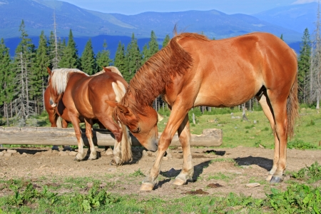 Horses on a summer mountain pasture Stock Photo - 15567145