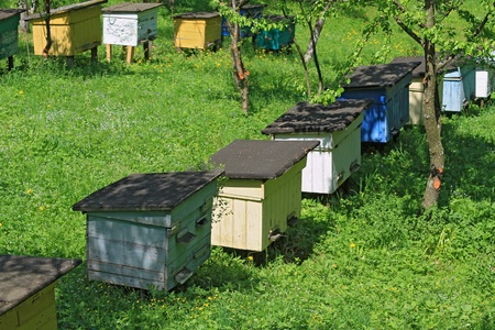 apiary: Apiary on a slope