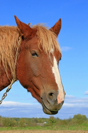 Head of a horse against the sky Stock Photo - 15825075