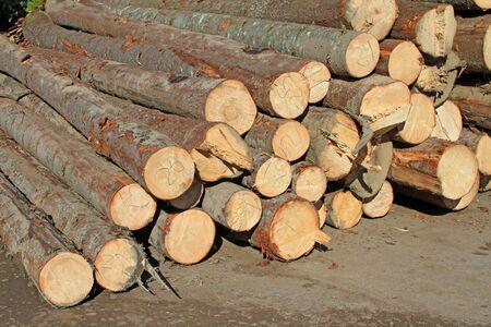 Wood preparation Stock Photo - 16157129