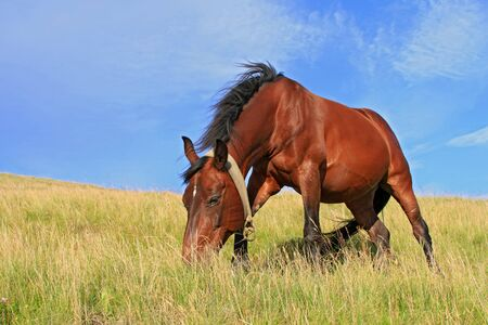 Horse on a summer pasture photo