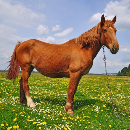 Horse on a summer pasture Stock Photo - 16427259