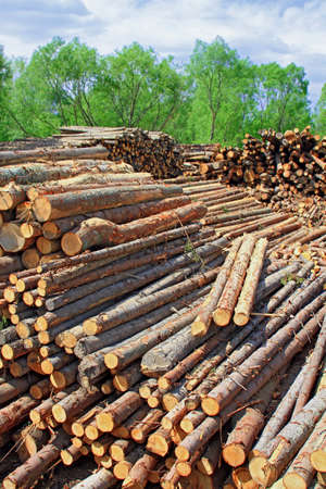 Wood preparation Stock Photo - 16427781