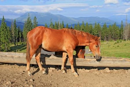 Horses on a summer mountain pasture Stock Photo - 16427584