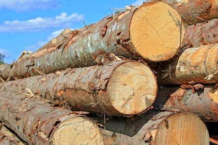 Wood preparation Stock Photo - 16427784