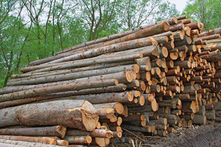 Wood preparation Stock Photo - 16506255