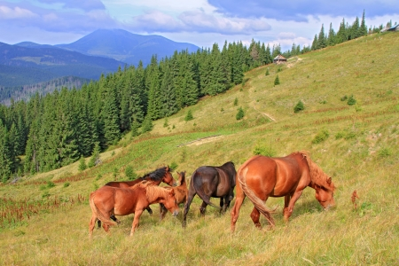 Horses on a summer mountain pasture  Stock Photo - 16755248