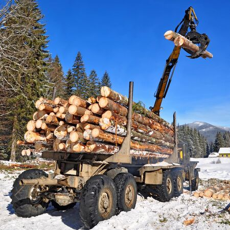 Preparation of wood and loading on transport Stock Photo - 16968440