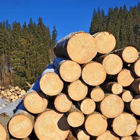 Wood preparation Stock Photo - 16991754
