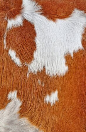 Fragment of a skin of a cow photo