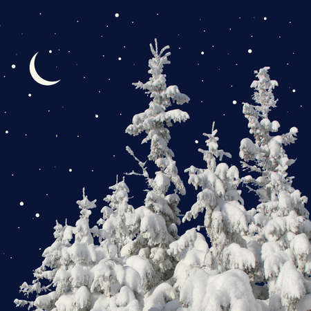 Firs under snow against the night sky with the moon Stock Photo - 17340818