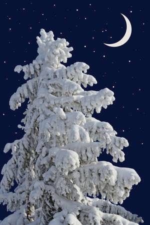 acerose leaf: Fir under snow against the night sky with the moon Stock Photo