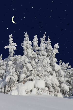 Firs under snow against the night sky with the moon Stock Photo - 17385297