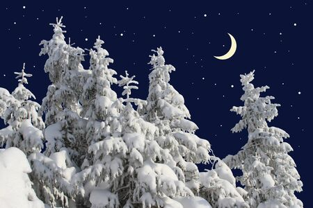acerose leaf: Firs under snow against the night sky with the moon   Stock Photo