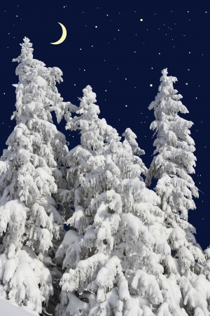 Firs under snow against the night sky with the moon Stock Photo - 17473461