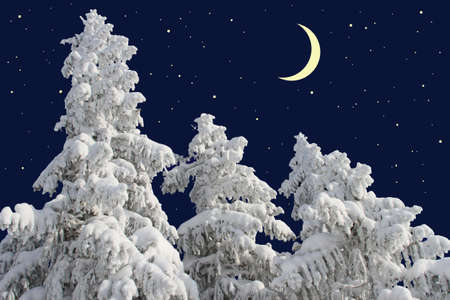 Firs under snow against the night sky with the moon Stock Photo - 17547451