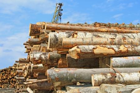 log deck: Wood preparation