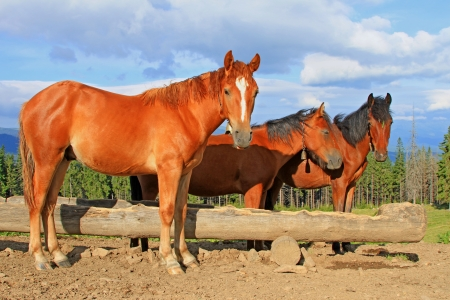 Horses on a summer mountain pasture Stock Photo - 17799071