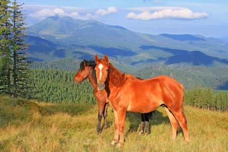 Horses on a summer mountain pasture Stock Photo - 17799231