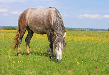 Horse on a summer pasture Stock Photo - 17799443