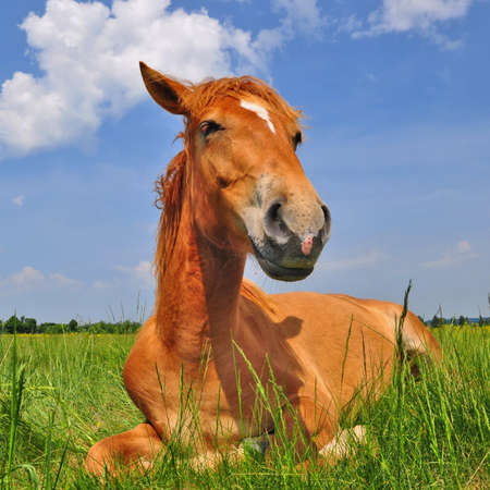 Horse on a summer pasture Stock Photo - 18195276