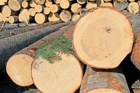 Wood preparation Stock Photo - 18290620