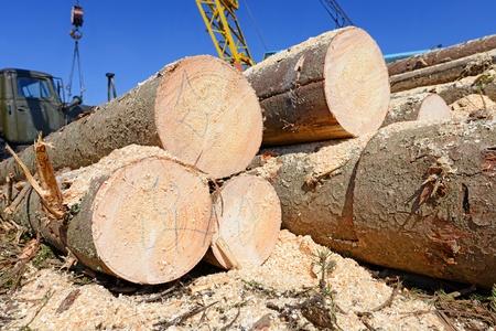 Wood preparation Stock Photo - 19157227