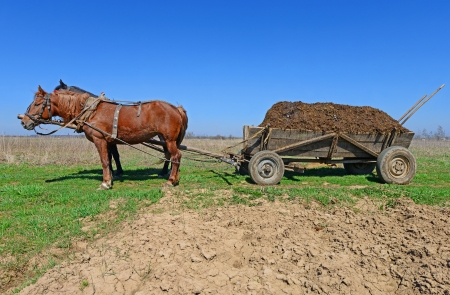 Horses with a cart loaded with manure