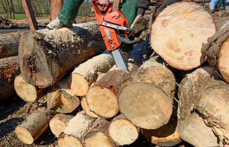 forest products: Scrap of a log a saw