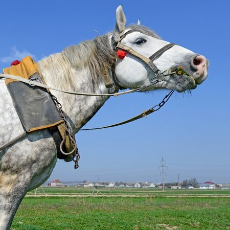 horse collar: Head of a horse in a harness against the sky