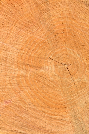 forest products: Cut of a log of an oak