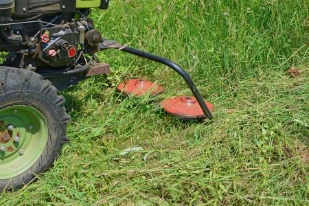 grass cutting: Grass cutting grasses