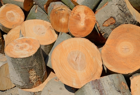 forest products: Blocks from a beech  Stock Photo